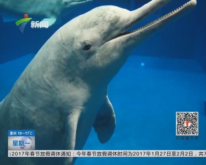 珠海:珍稀中华白海豚 亮相科普教育基地