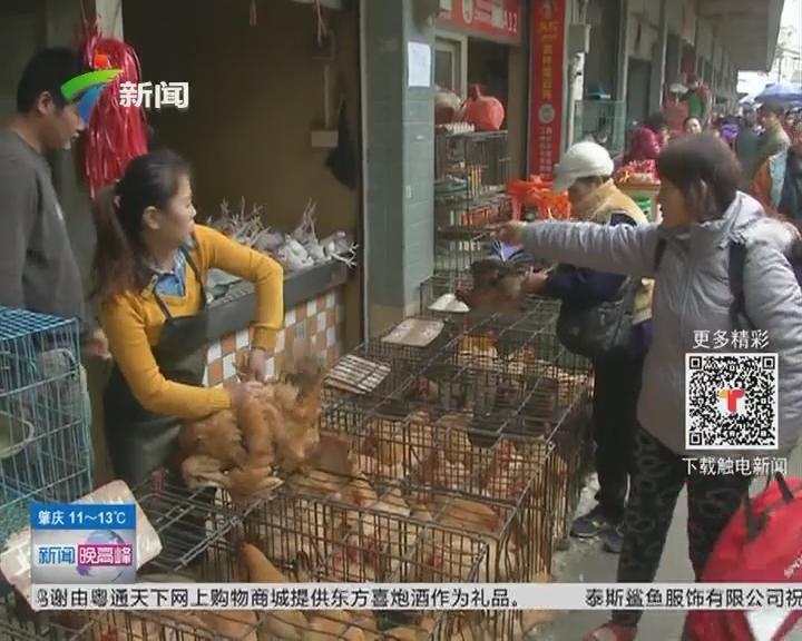 广州:明起禽类市场休市三天