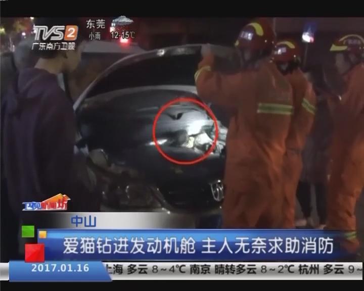 中山:爱猫钻进发动机舱 主人无奈求助消防