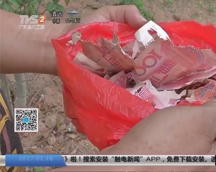 揭阳:家中老鼠多作怪 万元现金被咬碎