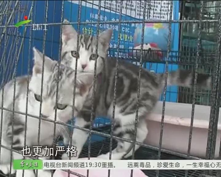 惠州:年光将至 宠物寄养迅速升温