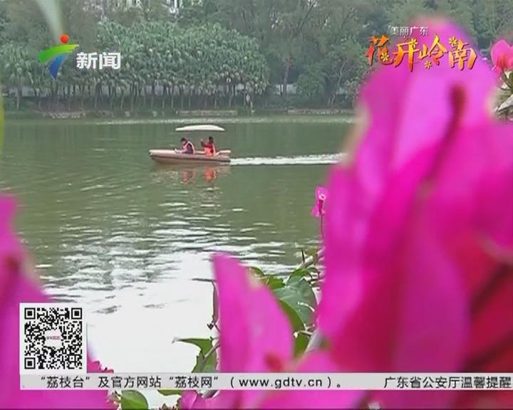 花开岭南:惠州 春来花开 踏青赏花好时节