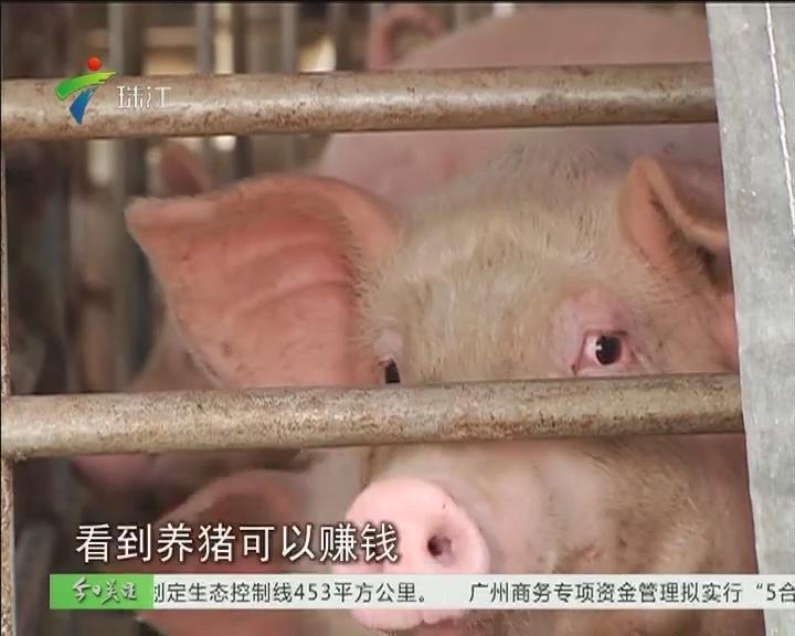 湛江:养猪场污染村庄 镇政府介入处理