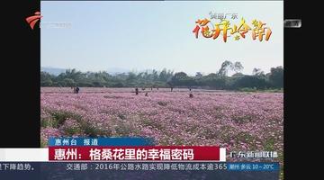 惠州:格桑花里的幸福密码