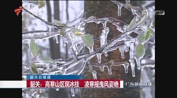 韶关:高寒山区现冰挂 凌寒摇曳风姿绝