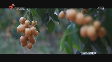 云浮:农业大数据推动农村新发展