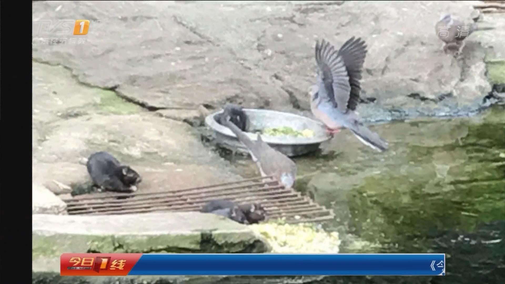 广州动物园:抢天鹅饭碗