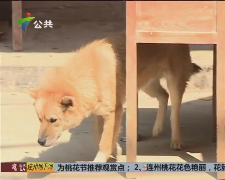 肇庆:一村民狂犬病发身亡 2.5公里内射杀犬只