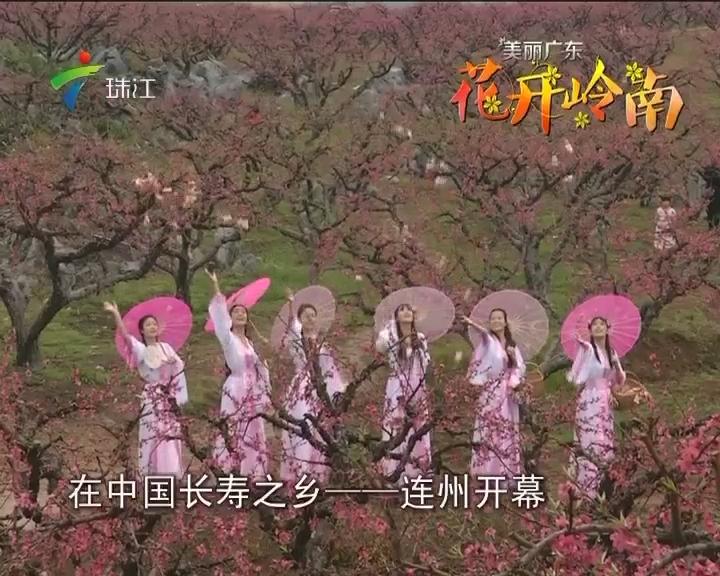 连州:千亩桃花迎春盛放 八方游客如痴如醉