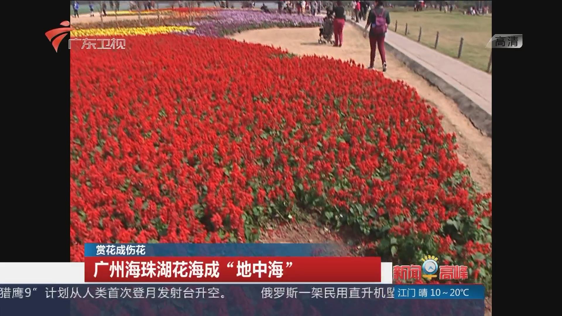 广州海珠湖公园:赏花成伤花 公园花海遭严重破坏