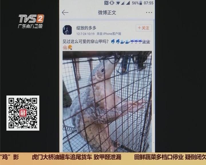 深圳:吃穿山甲微博曝光 林业部门介入调查