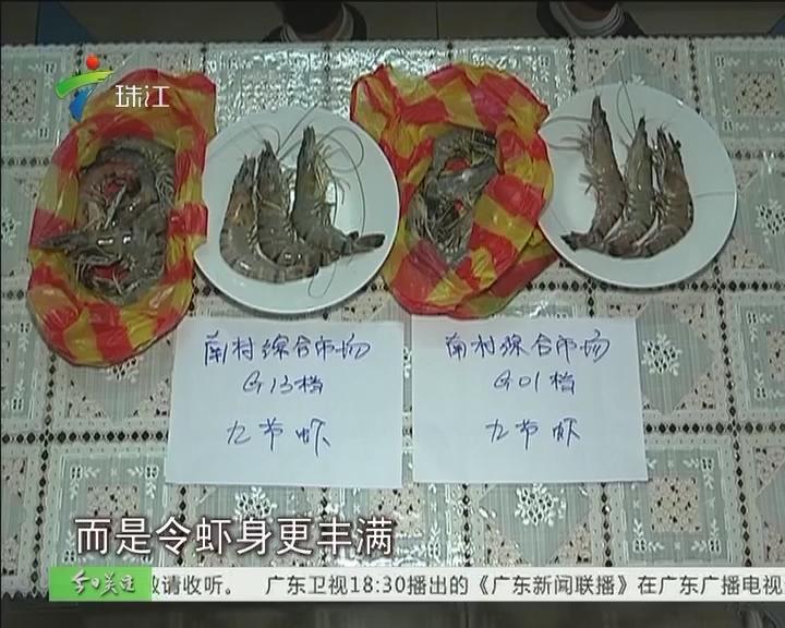 """""""注胶虾""""调查:海产档主对胶状物见惯不怪"""