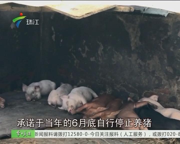 中山:无证养猪场经营超十年 居民盼清拆