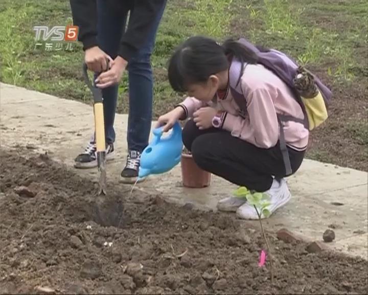 波仔美美艺术团植树节活动