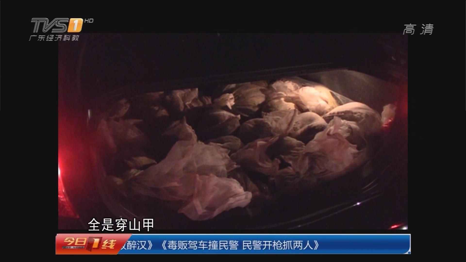 深圳:小车疯狂冲卡 内藏24只穿山甲!