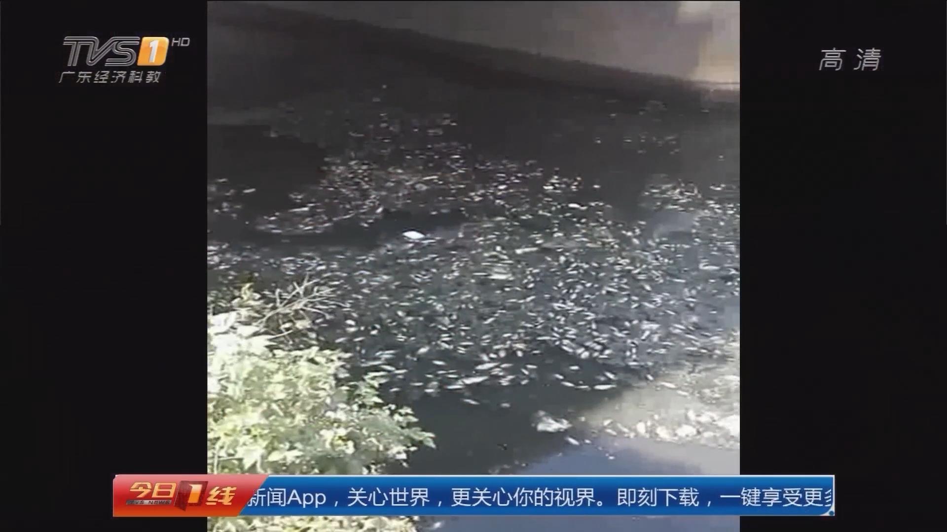 惠州惠阳:淡澳河又黑又臭遭投诉 记者调查