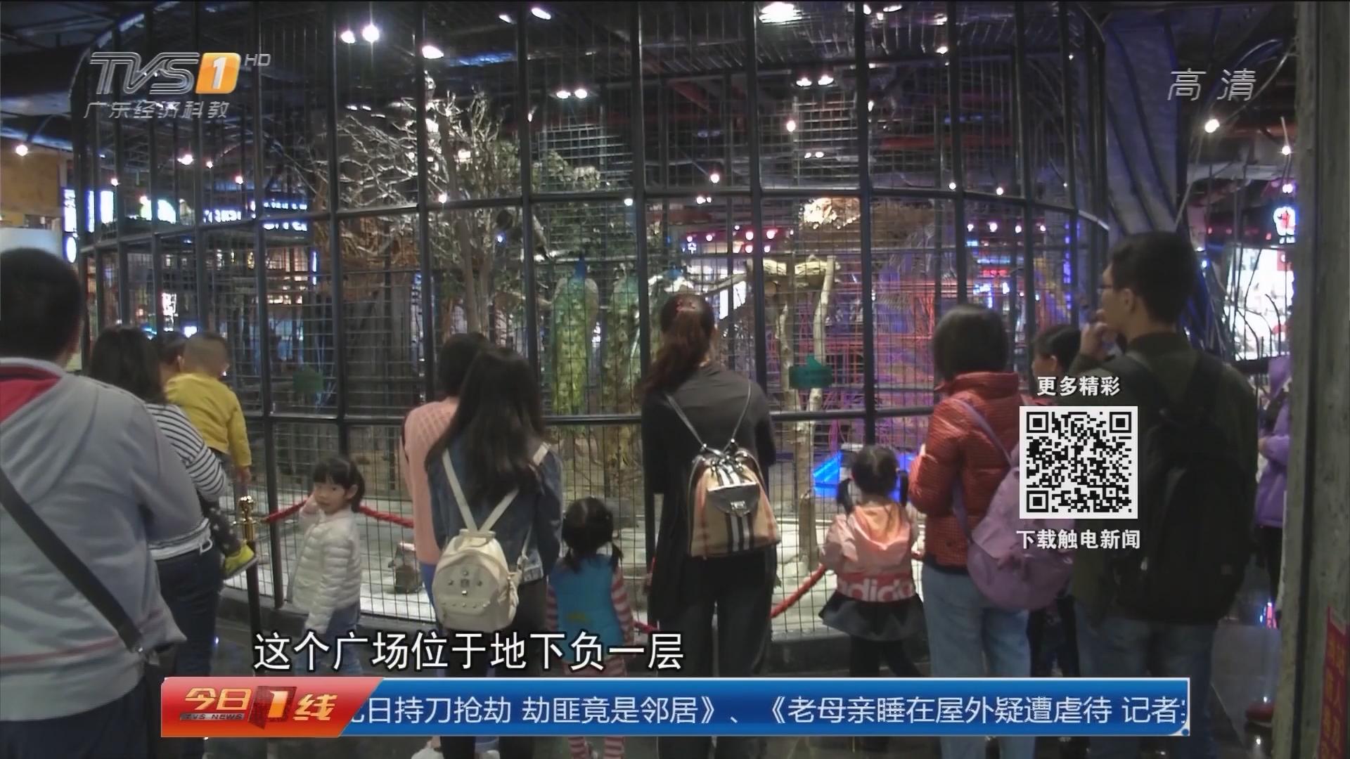 广州天河:地下商场办动物展览 引发争议