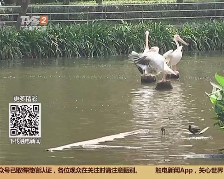 广州动物园:水质太差 将投2793万改造三大湖