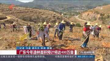 广东今年造林面积预计将达400万亩