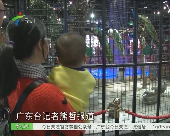 地下商场养动物展览 难道不怕禽流感?