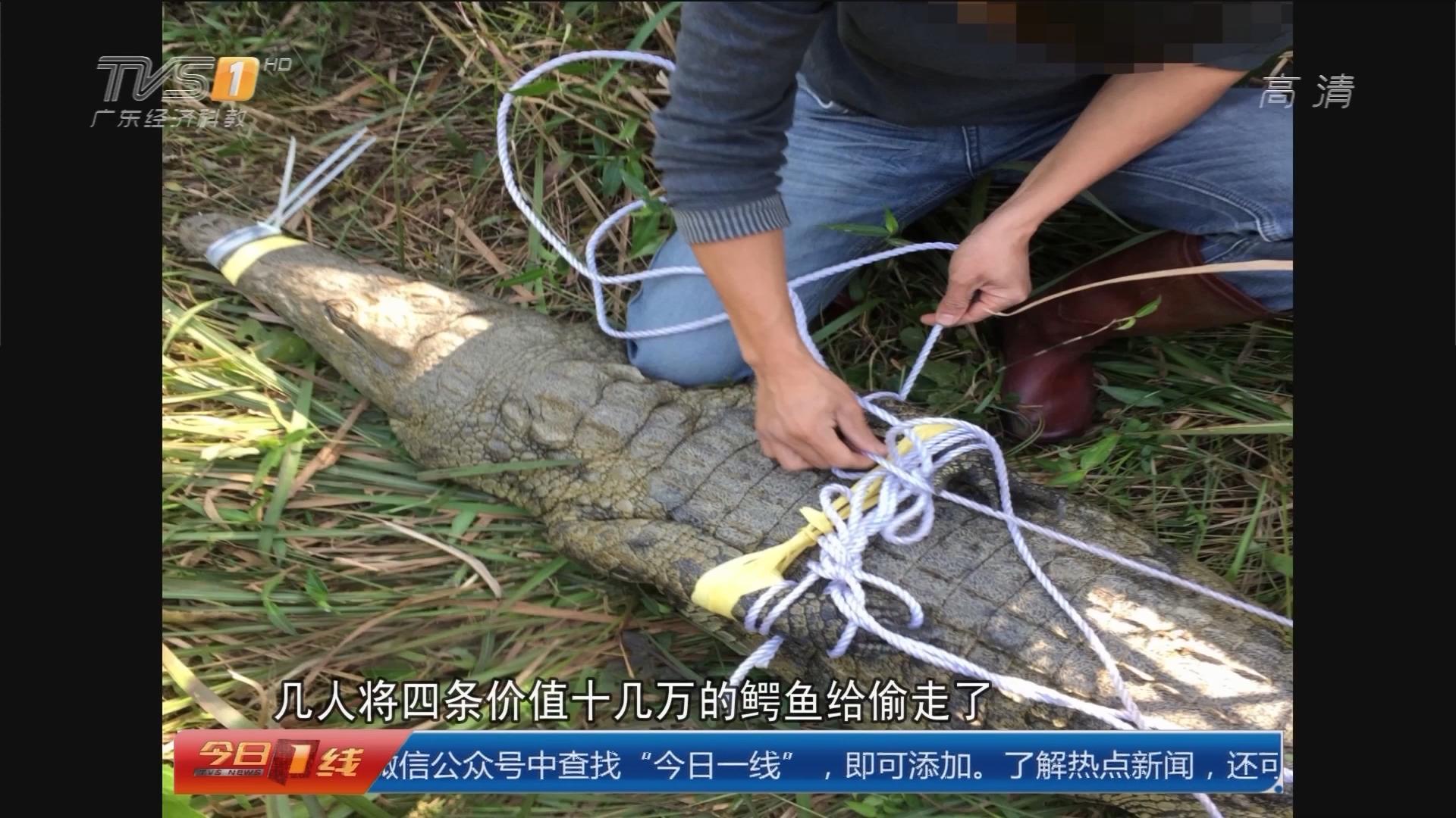 惠州龙门:高调晒贼赃 警方按图索骥一网打尽