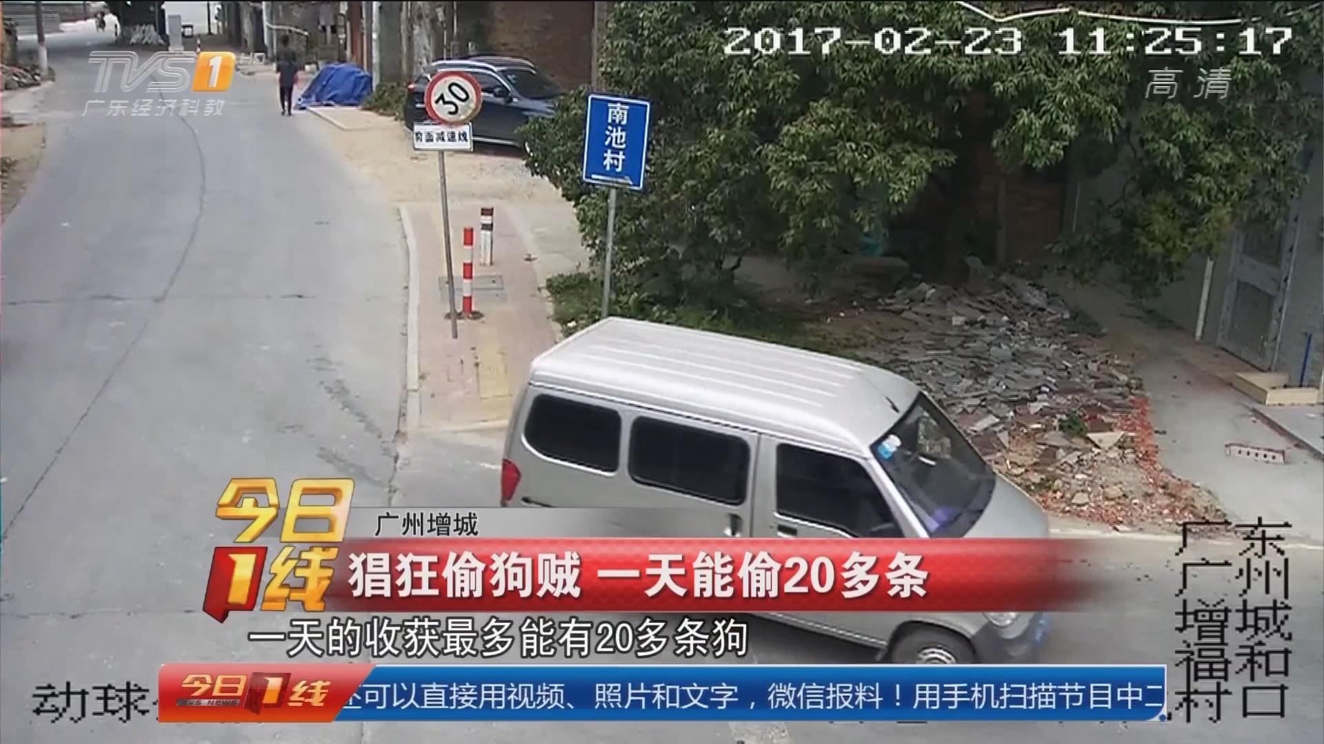 广州增城:猖狂偷狗贼 一天能偷20多条
