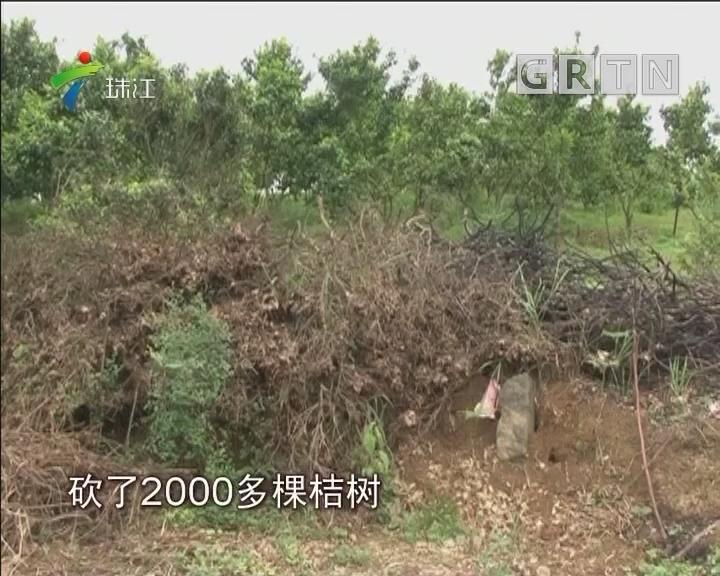 阳山:山下化工厂排废气 山上果树濒临死亡