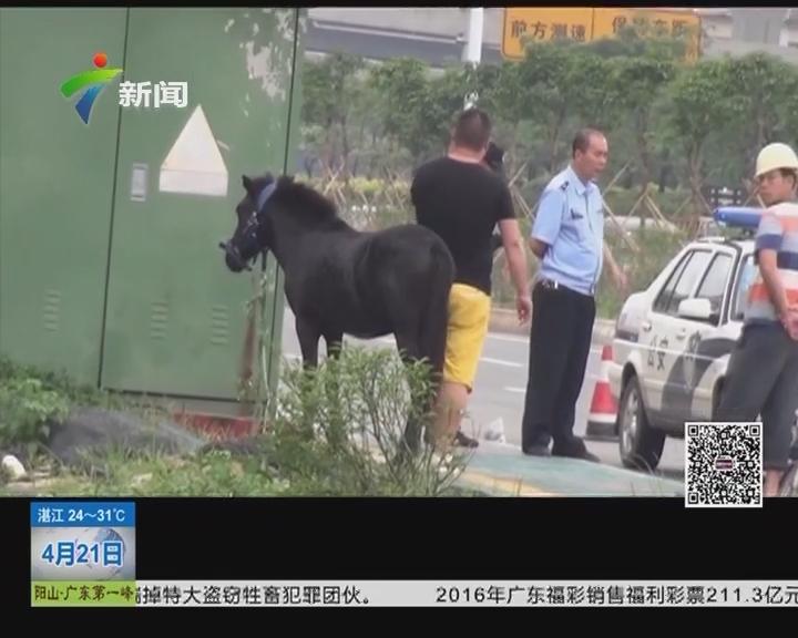 佛山南海:桂丹路上惊现奔跑的黑马