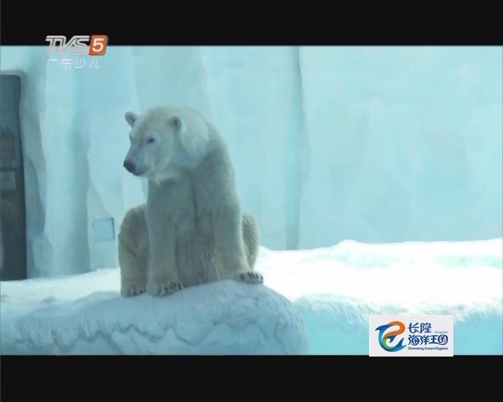 20170422《动物笑当家》北极熊丰容