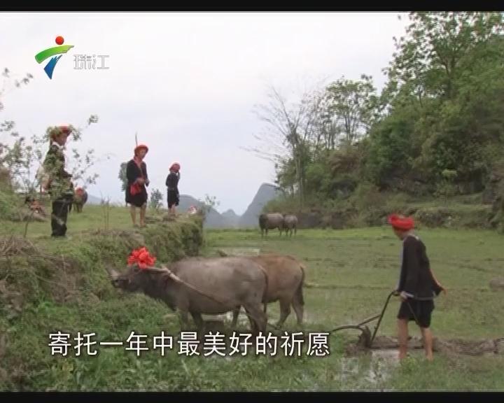 """连南:瑶族""""开耕节"""" 踏青迎丰年"""