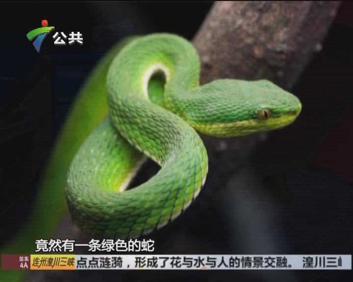 """田间有蛇出没 专家提醒可""""打草惊蛇"""""""