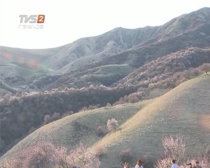 大美新疆:新疆伊犁春色撩人