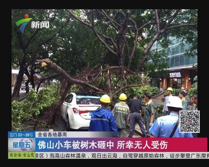 全省各地暴雨:佛山小车被树木砸中 所幸无人受伤