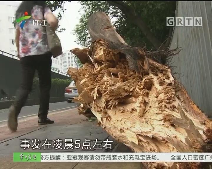 广州:大货车撞断树枝 环卫工迅速处理