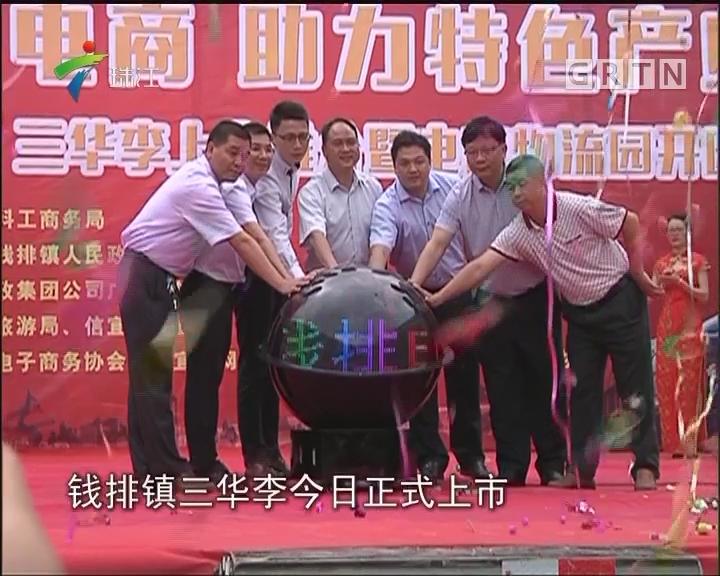 """信宜:农村电商+冷链直运 三华李""""走""""得更快"""