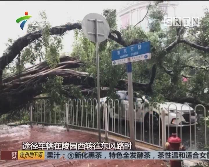 """大树""""斩""""断东风路 途径小车被压无人受伤"""