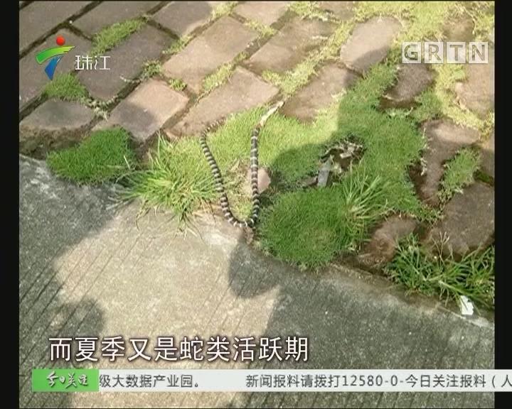 番禺:校园惊现剧毒银环蛇?吓坏学生