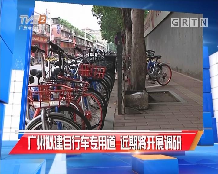 广州拟建自行车专用道 近期将开展调研