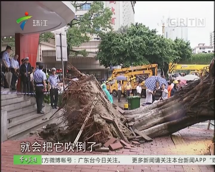 """雨天防隐患:大树倾倒 多辆车""""受伤"""""""