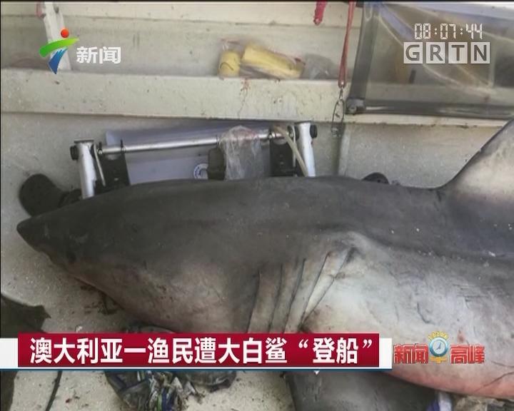 """澳大利亚一渔民遭大白鲨""""登船"""""""