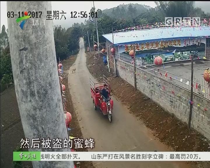 惠东:男子偷盗路边蜜蜂箱被抓获