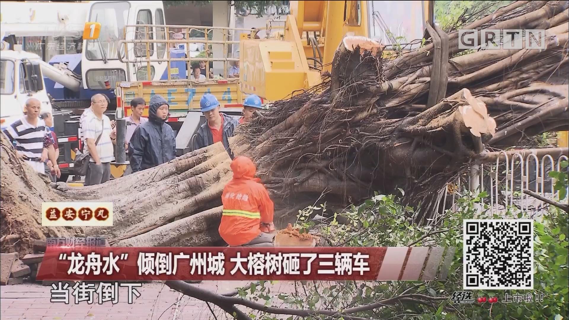 """""""龙舟水""""倾倒广州城 大榕树砸了三辆车"""