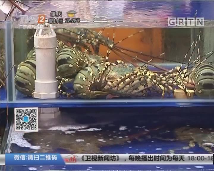 湛江:休渔期海鲜涨价 龙虾贵三倍