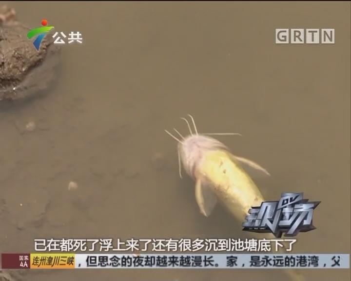 佛山:塘鱼突然反肚 原因不明心惊惊