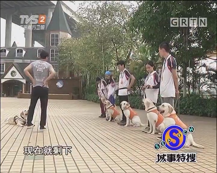 探秘华南唯一导盲犬基地