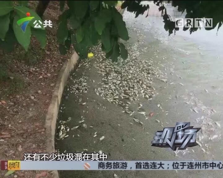 学生报料:校内现大片死鱼 疑污水倒灌所致
