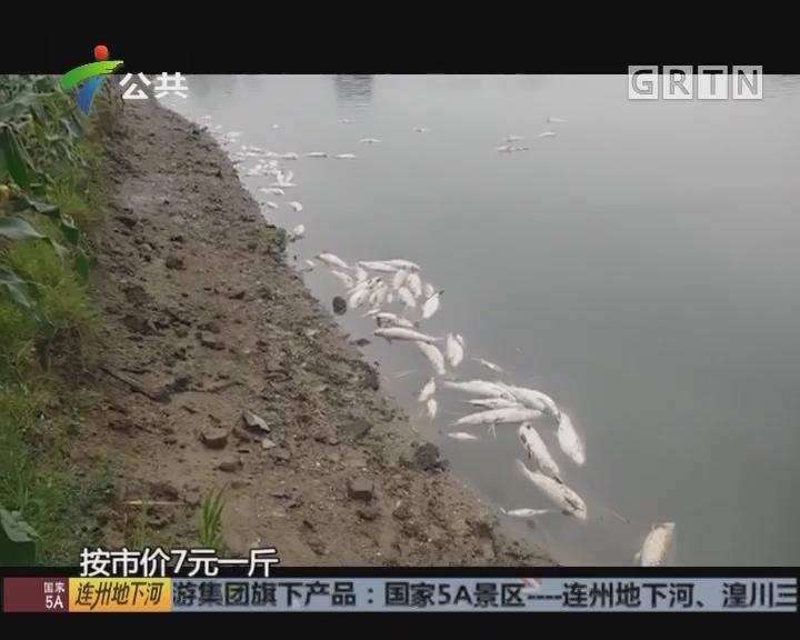 村民求助:设备故障断电 鱼塘万斤鱼反肚