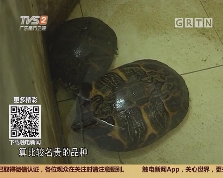 佛山:养殖户名龟被盗 警方跨省擒贼