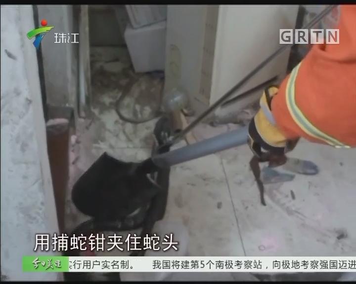 中山:4斤重眼镜蛇到访五金厂 消防迅速处理