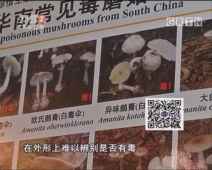 街坊频频误食中招 毒蘑菇外观难辨别